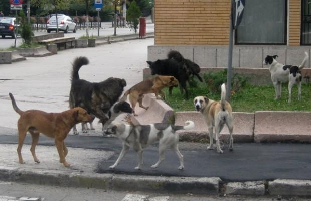 sunteti de acord cu eutanasierea cainilor vagabonzi-2